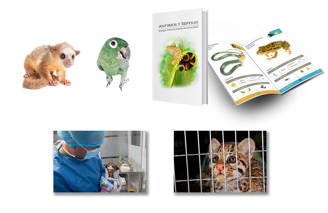 Neoselva-Conservation-projetcs-environmental-education-Home-Web