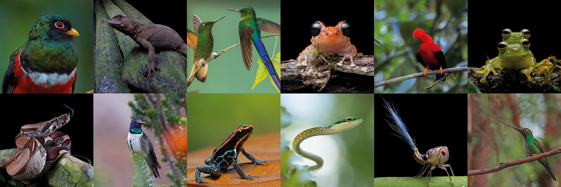 Neoselva-Wildlife-Photography-Collage-Ecuador-Home
