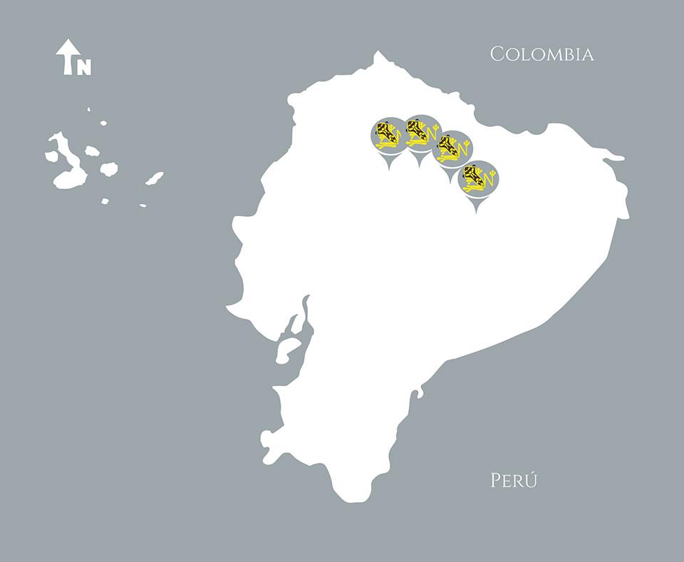 Neoselva-Mapa-Amazing-Bird-Ecuador-Photo-Tours-Web